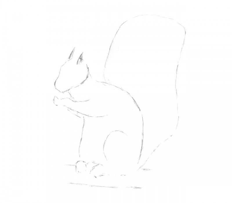 Как нарисовать белку: ТОП-120 фото лучших способов и техник рисования. Поэтапный мастер-класс для начинающих с примерами лучших рисунков