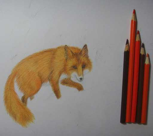 Как нарисовать лису - обзоры лучших способов создания рисунка. Нестандартные идеи и пошаговые инструкции рисования для начинающих