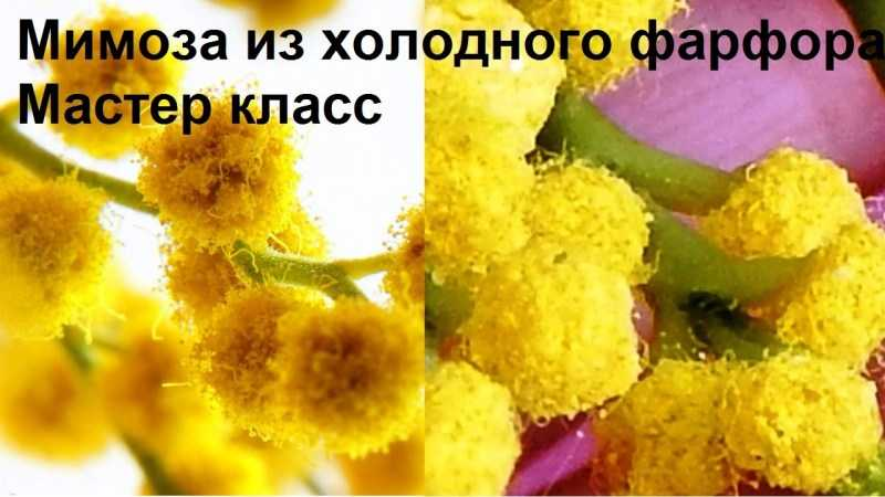 Мимоза поделка: ТОП-160 фото простых и сложных поделок. Мастер-класс для детей и взрослых по созданию мимозы своими руками