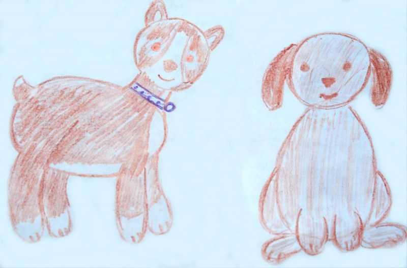 Раскраска собака 🐶 - полезные советы как нарисовать собаку. Инструкция с основными шагами рисования для детей (160 фото)