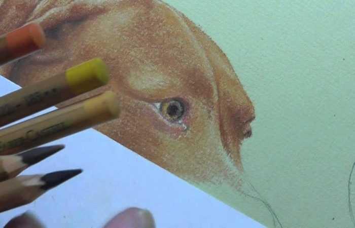 Раскраска собака 🐶 — полезные советы как нарисовать собаку. Инструкция с основными шагами рисования для детей (160 фото)